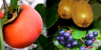 Плодни храсти и дръвчета