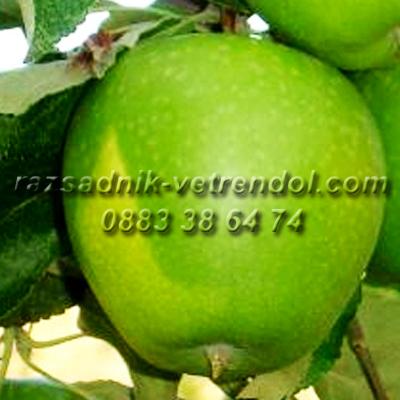 Ябълка сорт Грени смит