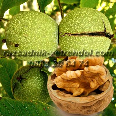 Орехи фиданки