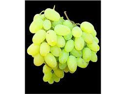 лоза, бяло грозде
